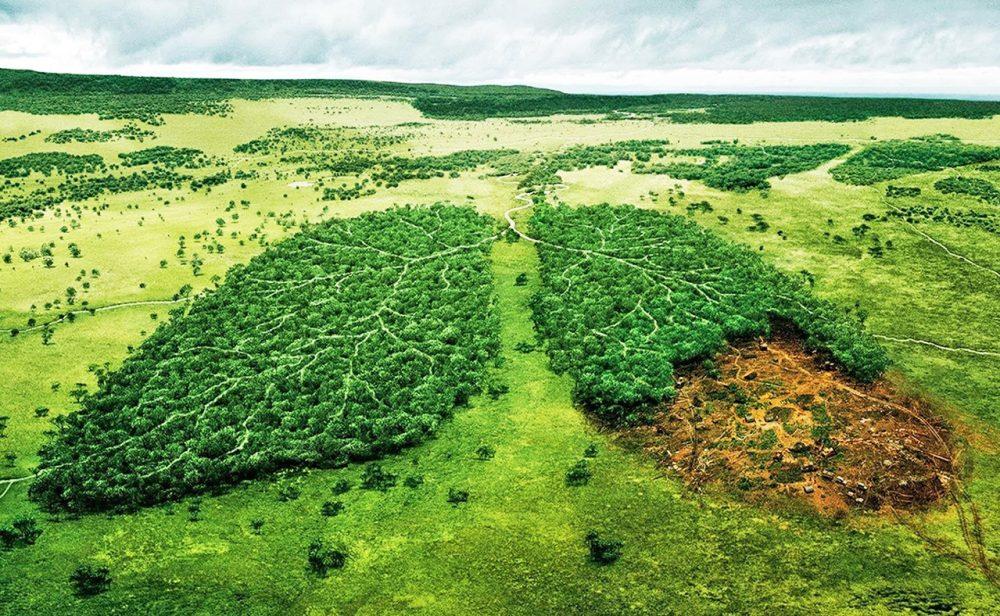 La deforestación de la selva: un suicidio masivo