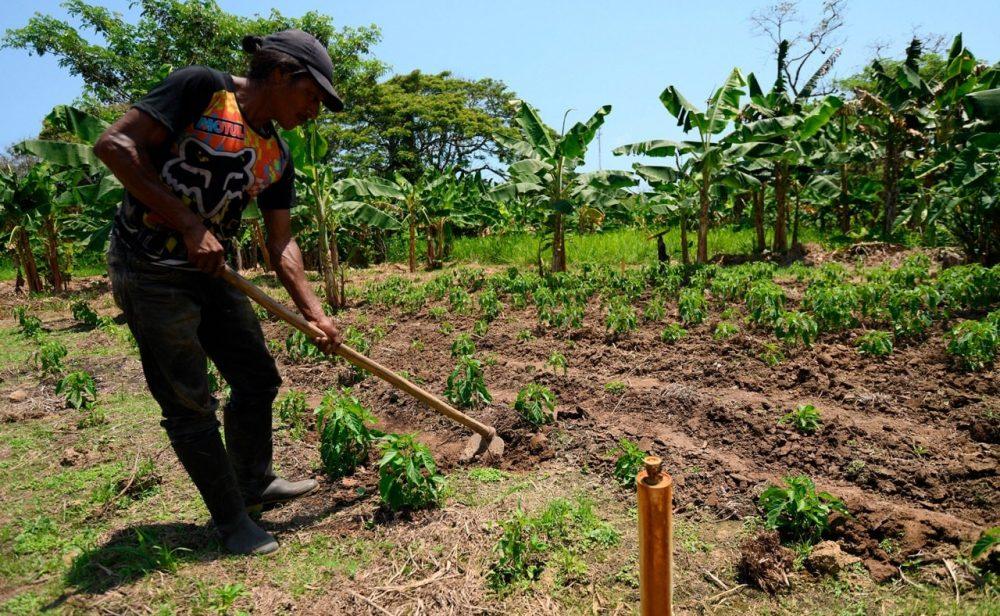 Especialidad agraria: una muerte anunciada que entierra aún más la paz