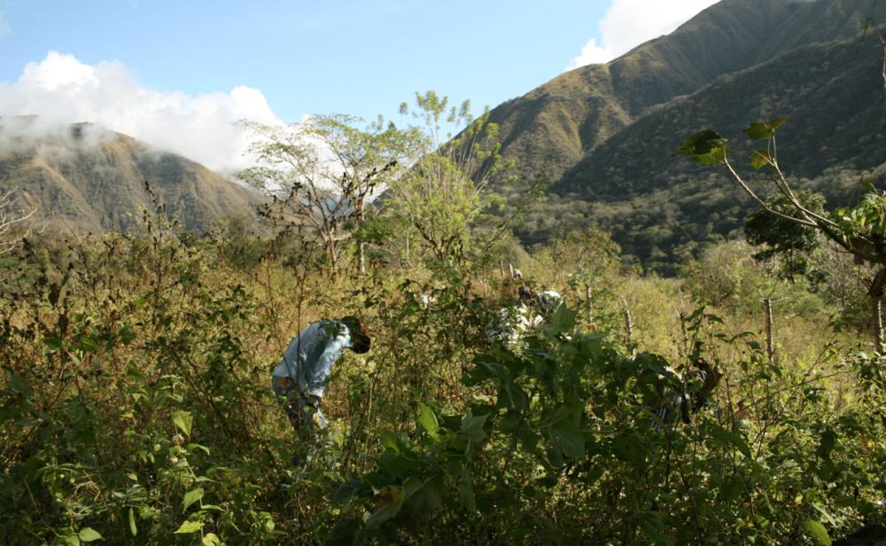 La disputa legal, el luto y la verdad de los muertos nutabe en Hidroituango