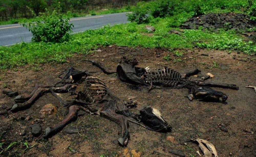 La otra tragedia brasileña que dejó los mismos 500.000 muertos que el coronavirus