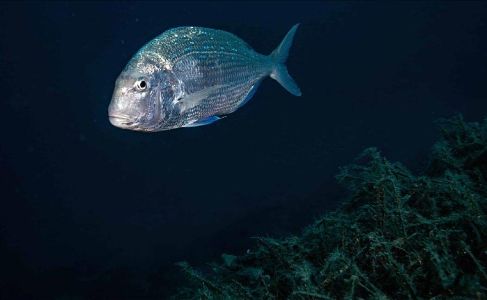 El oxígeno del mundo peligra por la contaminación de los océanos
