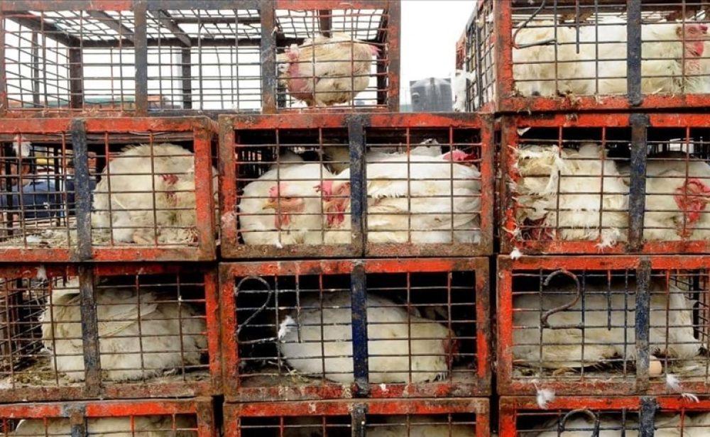 Primer caso de gripe aviar H10N3 en humanos: lo que dicen los expertos