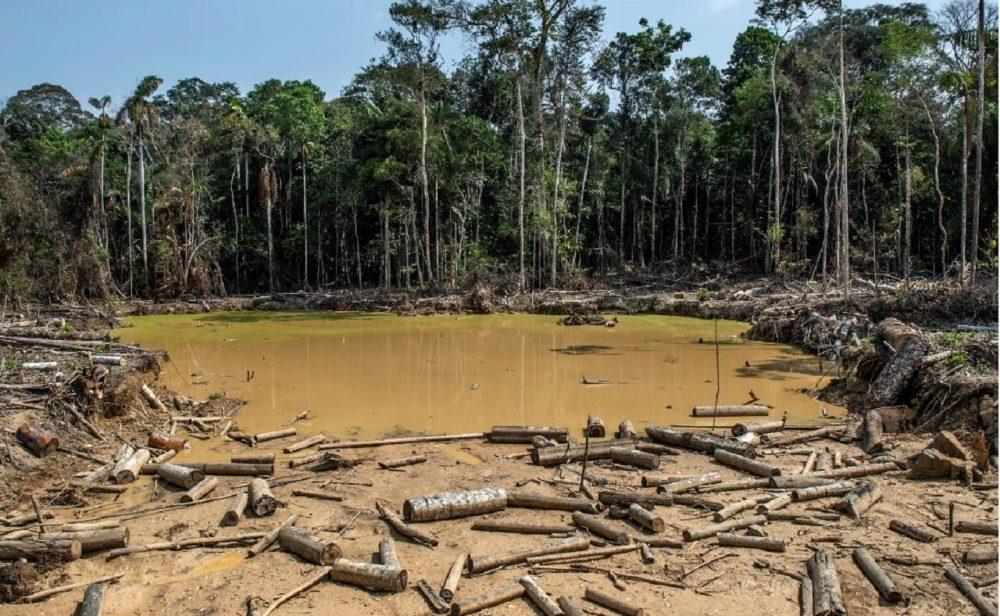 La selva herida: más de 171.000 hectáreas de bosque fueron deforestadas en 2020