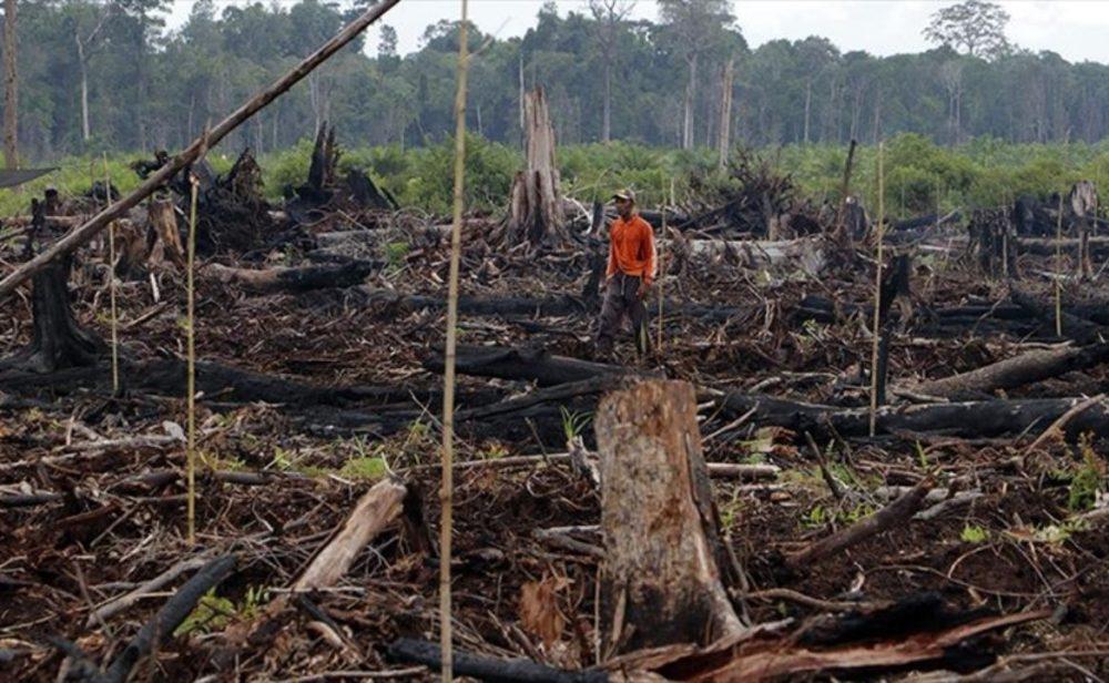 Parte de la Amazonia pasó de capturar CO2 a ser una fuente de emisión