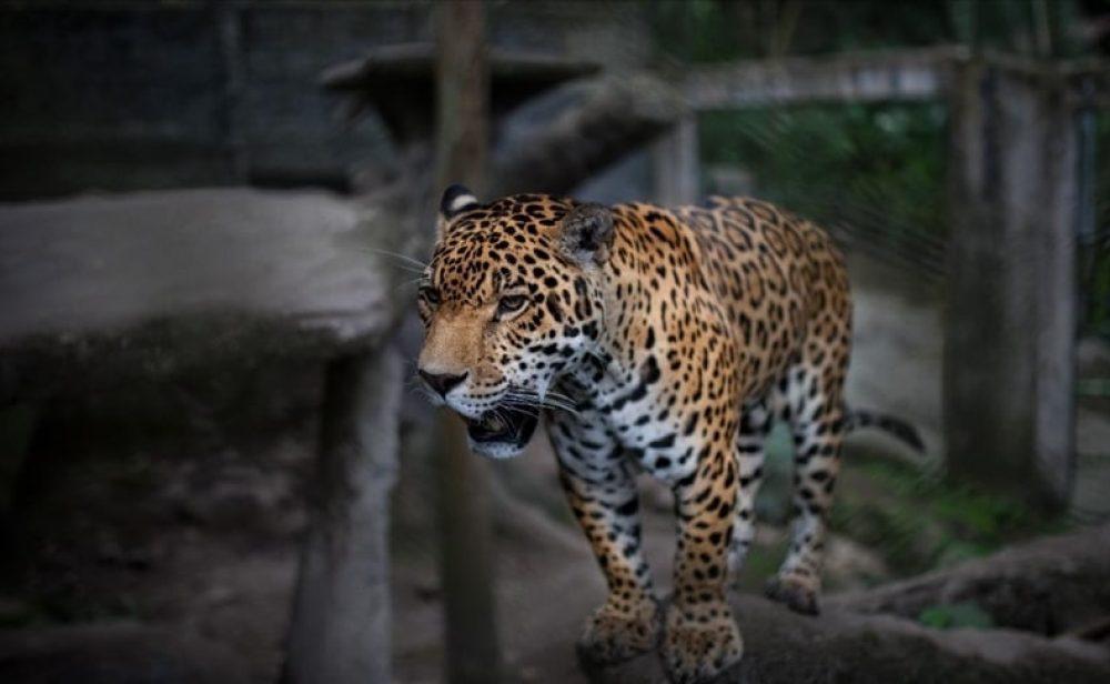 Deterioro de la biodiversidad quita 3,3 años de vida a los colombianos anualmente