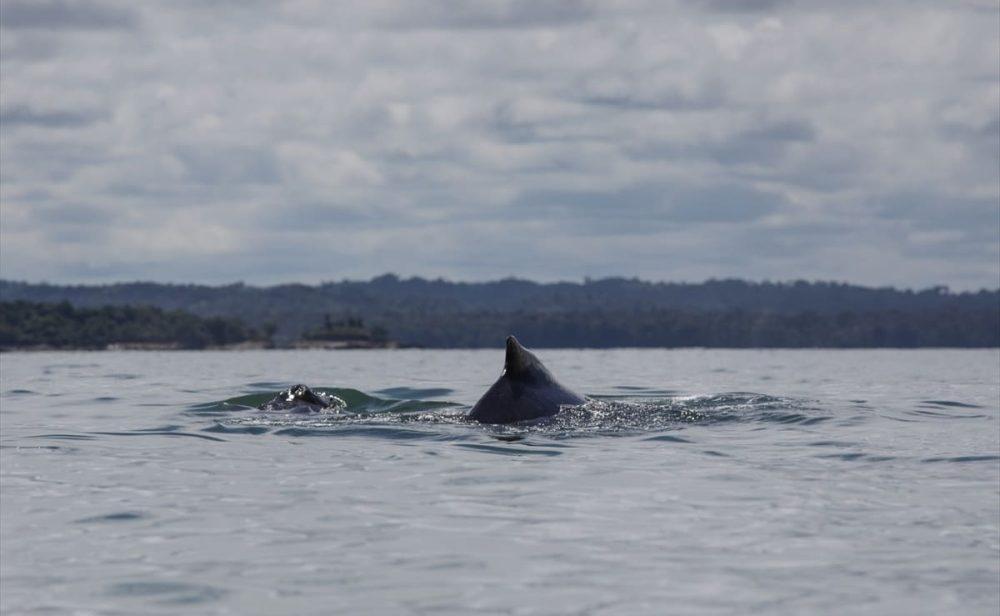Buenaventura y el renacer turístico en el Pacífico, un paraíso de ballenas, reservas naturales y brujas