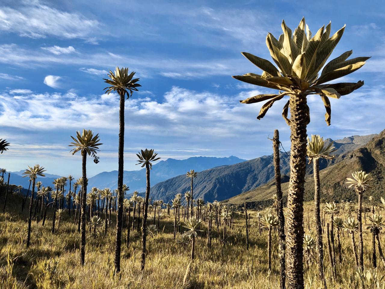 Parque Nacional Chingaza - Foto Luis Linares - Parques Nacionales