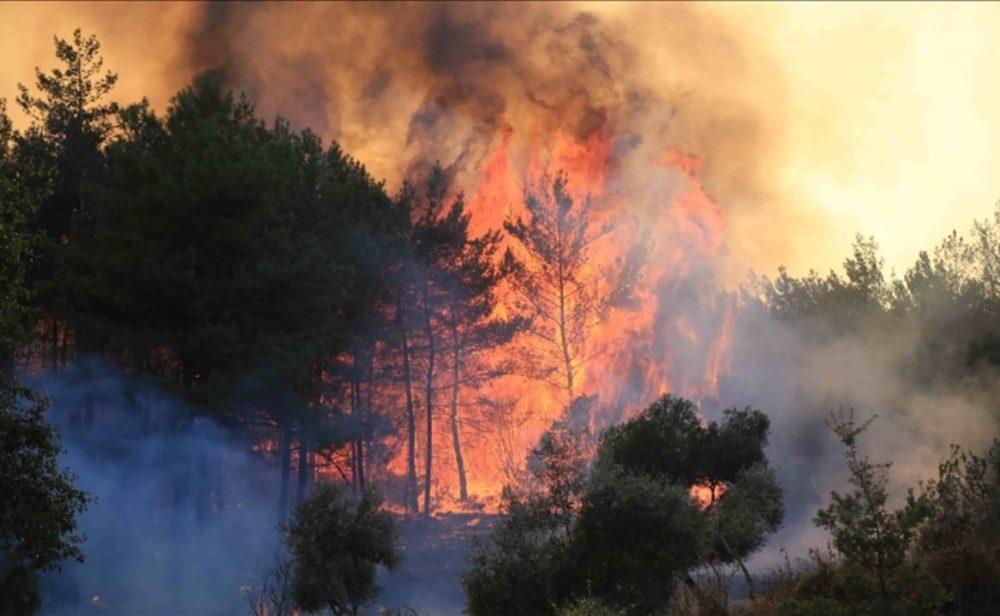 Los incendios que arrasan los bosques en diversas partes del mundo. Infografía