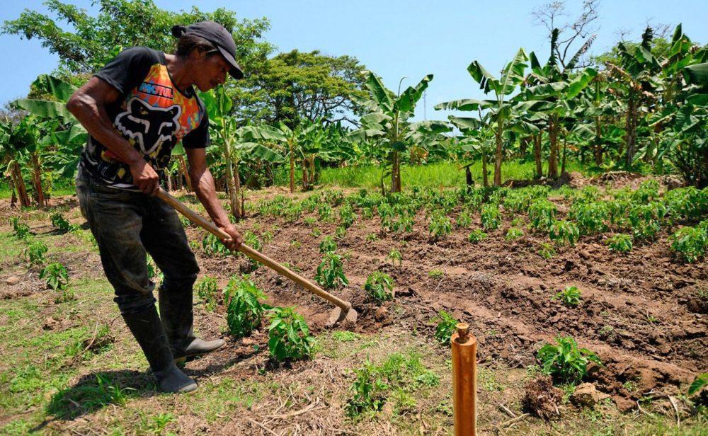 La espeluznante ineficacia de las medidas agrarias en Colombia