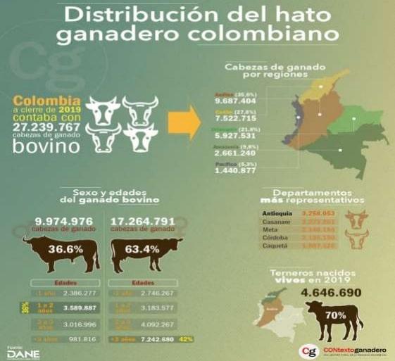 Hato ganadero en Colombia - Contexto Ganadero