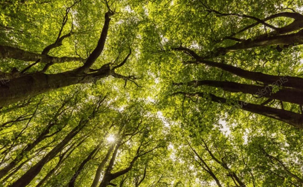Casi la mitad de los árboles y arbustos endémicos de Colombia están en riesgo de extinción