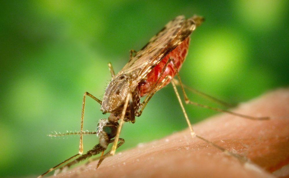 OMS aprueba vacuna contra la malaria
